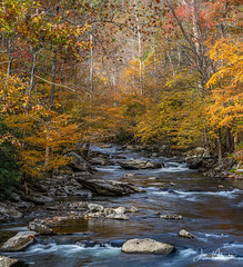 River Scene (Wits End Photography) Tags: