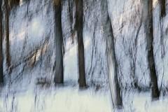 New Snow (ebergcanada) Tags: nature snow icm forest tree