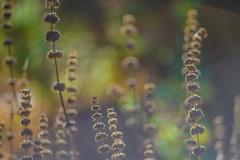 Dream of Eden (grimescene) Tags: nikonz6 sigmazpantel135mmf28 california dreamy bokeh flora forest garden santaclara nature