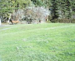 Fort Casey deer (Kent C.) Tags: mamiyarb67pros film filmphotography kodakfilm kodakportra160 120film