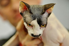 Adolf from Ryazan (Сonstantine) Tags: canon catslife cat catsoftheworld meowmeow animals photo pic