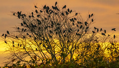 Birds in the tree (Arne.Holt) Tags: nature tree birds yellow sunrise outside denmark kolding vonsild