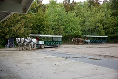 Mackinac Transportation (jjknitis) Tags: horsedrawn carriages transportation horses greatlakescruise lechamplain ponant september2019 tauck mackinacisland michigan