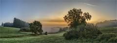 Reischenauer Ansicht (Robbi Metz) Tags: germany bavaria reischenau augsburgwestlichewälder landscape forest trees sky sunrise sonyilce7m3