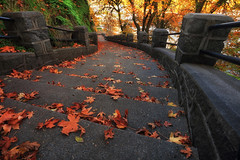 Falling Stairs (Ian Sane) Tags: ian sane images fallingstairs grandstaircase singerhillbluff mcloughlinpromenade oregoncity oregon autumn fall colors leaves perspective urban photography canon eos 5ds r camera ef1740mm f4l usm lens