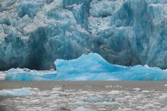 Endicott Arm and Dawes Glacier (jeff's pixels) Tags: endicott glacier alaska iceberg landscape nature ice ocean beauty car bus train plane
