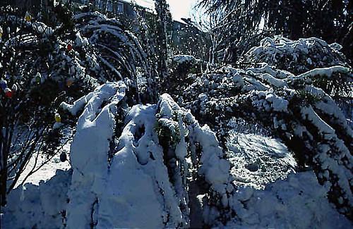 "Winter 2 • <a style=""font-size:0.8em;"" href=""http://www.flickr.com/photos/69570948@N04/49027618753/"" target=""_blank"">Auf Flickr ansehen</a>"