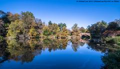 Central Park Pond (20191102-DSC07881-Edit) (Michael.Lee.Pics.NYC) Tags: newyork centralpark autumn fall pond lake architecture cityscape skyline skyscraper sony a7rm4 laowa12mmf28 magicshiftconverter gapstowbridge reflection