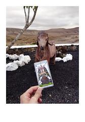 (Jordane Prestrot) Tags: statue fuerteventura goat tarot cabra chèvre lacaldereta jordaneprestrot devil diablo estatua aker diable ♍