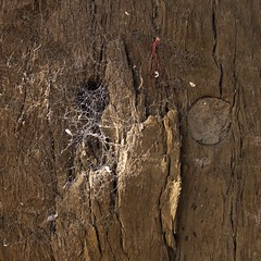 Hidey Hole (Padmacara) Tags: square g11 shadowlight spider web wood