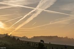 30102016-DSC_0136 (vidjanma) Tags: ciel silhouettes soir vaches