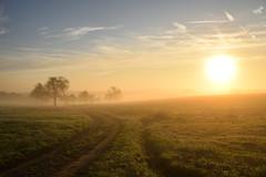 Lever de soleil brumeux (Croc'odile67) Tags: nikon d3300 sigma contemporary 18200dcoshsmc paysage landscape brume mist leverdesoleil arbres trees ciel sky champ chemin