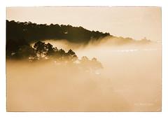 000039 (Thai_Meo) Tags: dalat fog nikonf4 film135 fuji100