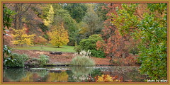Autumn Tints (maryimackins) Tags: autumn tints sheffield park sussex mary mackins