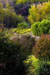 (Ute Kluge) Tags: rakusai bamboo park kyoto rakusaibamboopark villakatsura autumn fall colours
