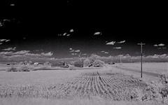 Rows (Neal3K) Tags: ir infraredcamera kolarivisionmodifiedcamera kolarivisionblueirndvifilter i80iowaillinoisarea 70mphshots highwayshooting bw blackandwhite rows