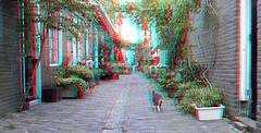 Straatje Haarlem 3D