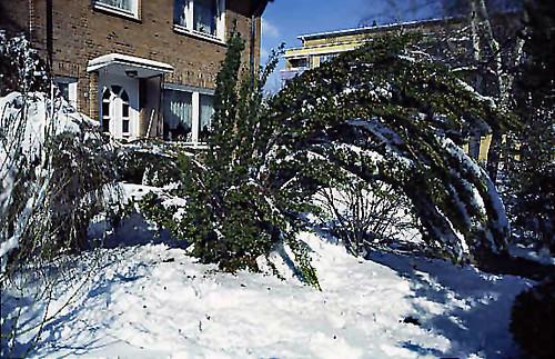 "Winter 3 • <a style=""font-size:0.8em;"" href=""http://www.flickr.com/photos/69570948@N04/49028132441/"" target=""_blank"">Auf Flickr ansehen</a>"