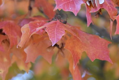 Changing of colors (Andrew Penney Photography) Tags: tree leaves leaf colors fall lake okc flowers hefner water plants life