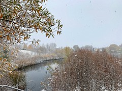 The Flakes Arrived (Haytham M.) Tags: early falling clouds houses shrubs pond trees november morning flakes canada ontario snow