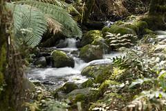 (louisa_catlover) Tags: mtdonnabuang melbourne victoria australia spring waterfall river landscape longexposure rainforestgallery cementcreek