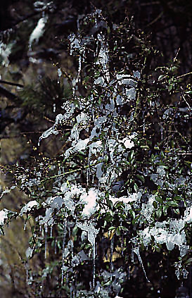 "Winter 7 • <a style=""font-size:0.8em;"" href=""http://www.flickr.com/photos/69570948@N04/49028343272/"" target=""_blank"">Auf Flickr ansehen</a>"