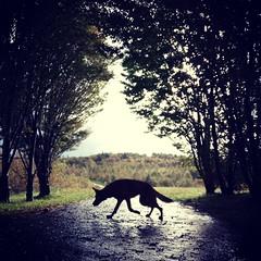 Que viene el lobo (eitb.eus) Tags: eitbcom 42667 g156511 tiemponaturaleza tiempon2019 monte gipuzkoa irun elenabotello
