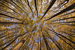 The Glow (Laymons Pics) Tags: virginia shenandoahnationalpark fall fallfoliage fallcolorsinvirginia trees sonya7iii sigma15mmfisheye