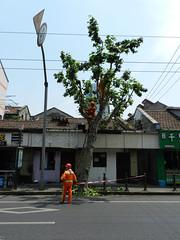 The Orange Monkeys (marco_albcs) Tags: china chn shanghai xangai jewishneighbourhood street workers tree society orange shanghaishi