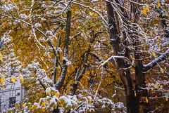 Frist snow !  DSC_3879 (andrey.salikov) Tags: 180550mmf3556 magnifique nikond60 atrevida baltic beautiful buenisima city colorfulstreets colour colourfulplaces dreamscene europe fantasticcolors fantasticplaces foto free goodatmosphere gorgeous guapa harmonyday2019 harmonyvision latvia latvija lettonia light lovely moodshot nice niceimage niceplace nikon ottimo peacefulmind photo relaxart riga scenery sensual sensualstreet streetlight stunning tourism travel trip wonderful фото отпуск туризм