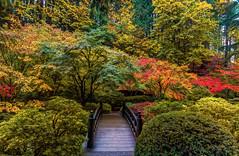 Japanese Moon Bridge (Cole Chase Photography) Tags: portland japanesegarden autumn fall oregon pacificnorthwest