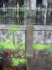 Still life: Moldy concrete wall with green lichens in downtown Rangoon, Burma