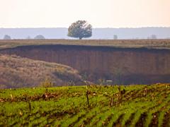 Peisaj ilfovean (Dumby) Tags: landscape ilfov românia outdoor nature autumn fall peisaj
