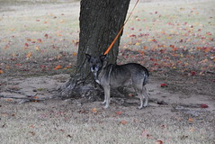 Chewy the Dog (Andrew Penney Photography) Tags: tree leaves leaf colors fall lake okc flowers hefner water plants life