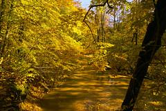 025005a  Shades And Shadows Along Sand Creek (David G. Hoffman) Tags: creek park fall fallcolors trees shadows