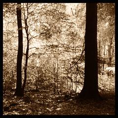silhouette (Claudio Taras) Tags: claudio contrasto controluce rolleiflex35f rollfilm mediumformat medioformato taras tanol moerschchemistry moersch shadow tree alberi film analog