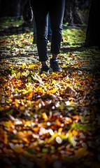 Autumnal Walk (Andy J Newman) Tags: autumn color leaves autumnal bristol colorefex colour d500 feet girl harbour harbourside legs nikon strret england unitedkingdom