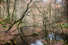 My favorit (Raphs) Tags: sverige sweden söderåsen söderåsennationalpark söderåsensnationalpark skärån river stream forest wood autumn fall calm thicket trees branches beechforest water surface raphs canoneos70d canonefs1585mmf3556isusm notincentral valley