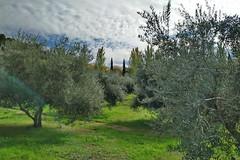Los olivos en otoño (Micheo) Tags: spain olivar olivos olives aceitunes olivegrove campos fields cementerio