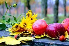 #autumn in #odessa 🍂🍁 (molokoimed) Tags: autumn odessa