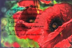 """We shall not Sleep"" (L E Dye) Tags: remembranceday poppies wwi remember canada ledye nikon johnmccrae inflandersfields november11 lestweforget d5100"
