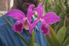 Cattleya jenmanii var. rubra (douneika) Tags: cattleya jenmanii var rubra orchidea orchidaceae orquidea orchid orchidee taxonomy:family=orchidaceae taxonomy:binomial=cattleyajenmaniivarrubra