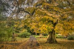 Autumn Path (dmoon1) Tags: fujifilmxt2 botanicgardensdublin autumn