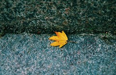 The lonely leaf (erlingraahede) Tags: melancholic bedifferent poetic artistic vsco canon stone leaf autumn germany