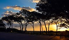 Sunrise (jimpillion) Tags: myrtlebeachstatepark southcarolina myrtlebeach sunrise nature sunset naturephotography southcarolinastatepark clouds