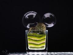 oxymoron.. (Antonio Iacobelli (Jacobson-2012)) Tags: macro 120mm fujinon mediumformat fujiflm bari led boom flat plant cactus bubble oxymoron ossimoro