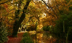 Canal Meandering (Englepip) Tags: englepip basingstoke dogmersfield hampshire shadow sunlight woodland path amber gold colours fall autumn leaves trees reflections water canal