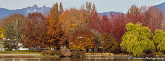The twin peaks of The Lions in the background (R. Sawdon Photography) Tags: autumn fall leaves colours colors troutlake bc canada trees red green lake water park mountains vancouver metrovancouver