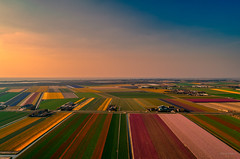 Patches of Holland. (Alex-de-Haas) Tags: dji dutch europa europe fc6310 holland nederland nederlands netherlands noordholland p4p phantom phantom4 phantom4pro aerial aerialphotography agriculture akkerbouw beautiful beauty bloemen bloemenvelden boerenland bollenvelden bulbfieldsflowerfields farmland farming flowers landbouw landscape landscapephotography landschaft landschap landschapsfotografie lente lucht luchtfotografie mooi polder pracht quadcopter schoonheid skies sky spring sundown sunset tulip tulips tulp tulpen zonsondergang schagerbrug northholland