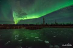 Aurora on Ice (kevin-palmer) Tags: fairbanks alaska october fall autumn cold ice icy nikond750 evening frozen pond wetland methane bubbles reflection sigma14mmf18 aurora auroraborealis northernlights green astrometrydotnet:id=nova3735205 astrometrydotnet:status=failed